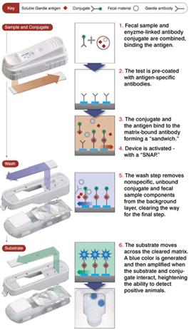 SNAP 酵素抗体法