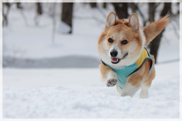雪ダッシュ①