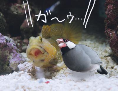ほえる魚_a