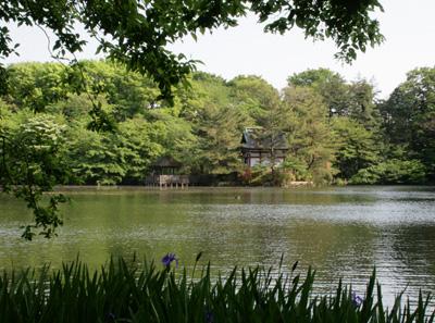 森と池2_a