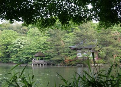 森と池1_a