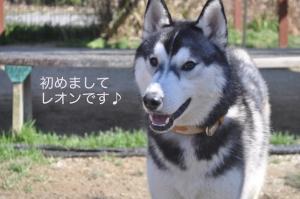 04.06愛ハス1