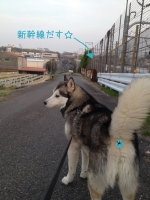 04.09散歩1