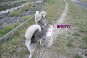 04.13散歩1