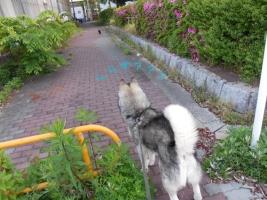 05.07散歩3