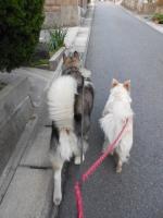 05.07散歩