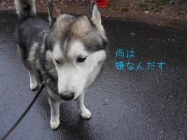 05.12散歩1