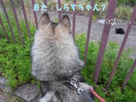 05.14散歩2