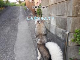 05.14散歩1