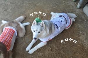 06.01愛ハス2