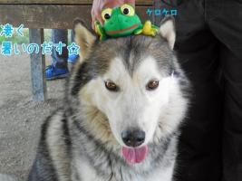 06.01愛ハス1
