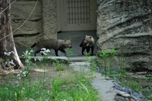 5.06動物園15