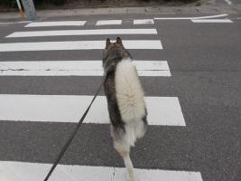 06.10散歩3