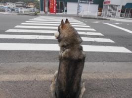 06.10散歩2