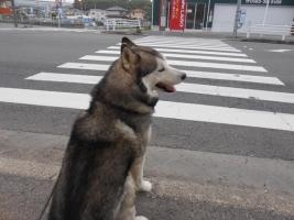 06.10散歩1
