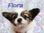 20140228flora.jpg