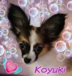 s20140516koyuki.jpg