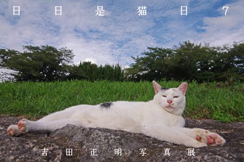 日日是猫日7