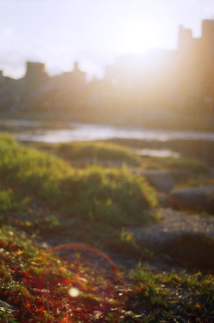 落ち葉の頃、太陽。