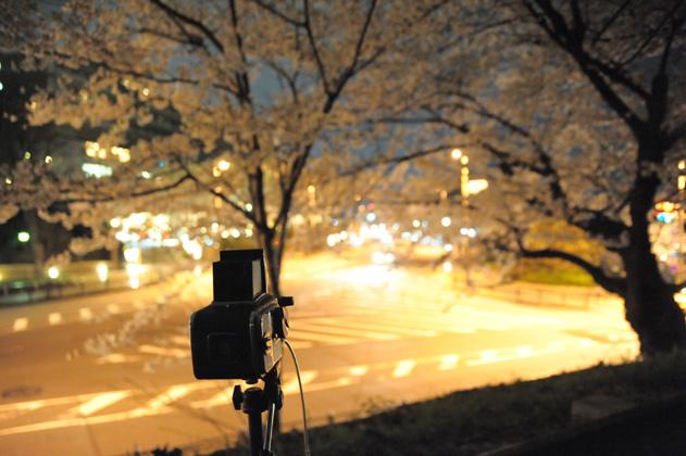 今夜夜桜を