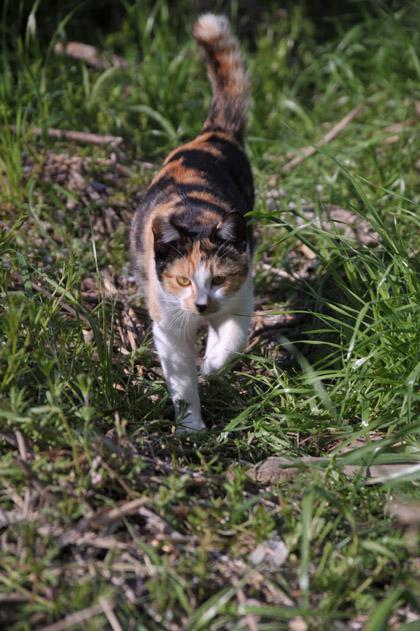 三毛猫と草叢と。