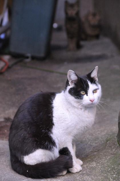 黒白猫と仲間と。