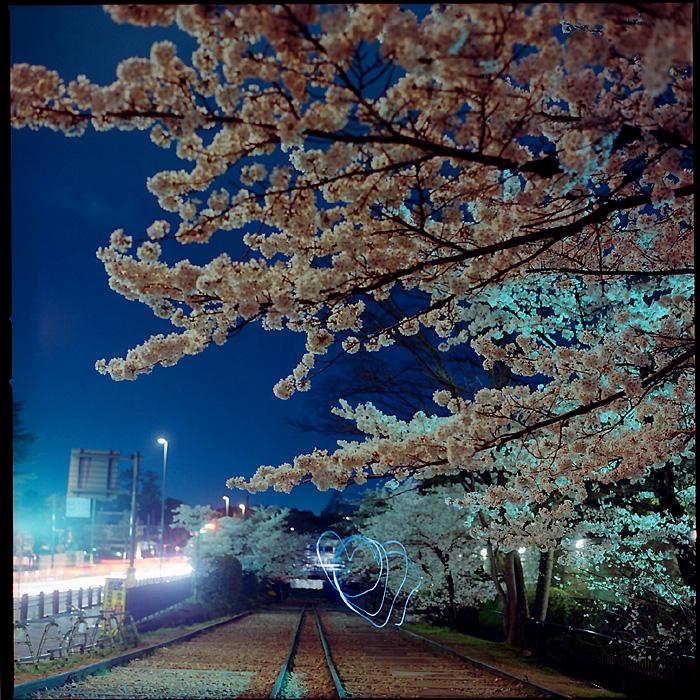 夜桜とハート