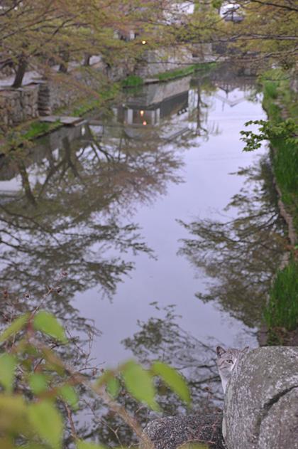八幡堀と猫/かくれんぼ