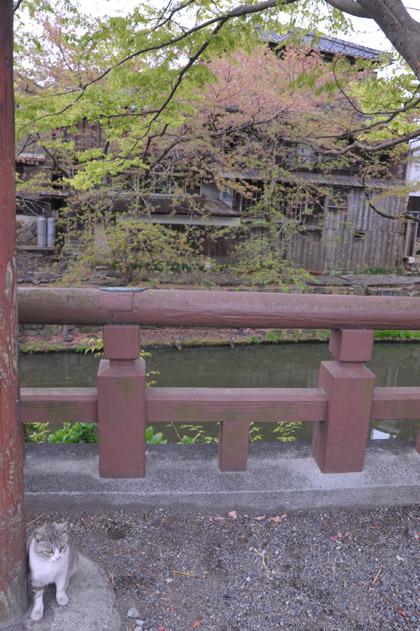 八幡堀とサバ白猫/近江八幡