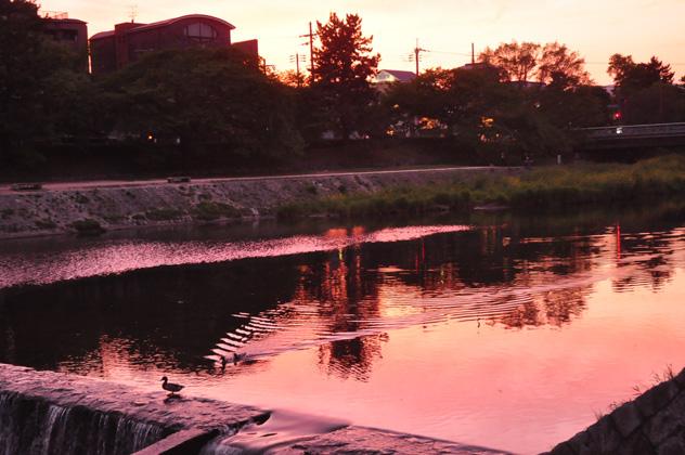 夕焼け水鳥