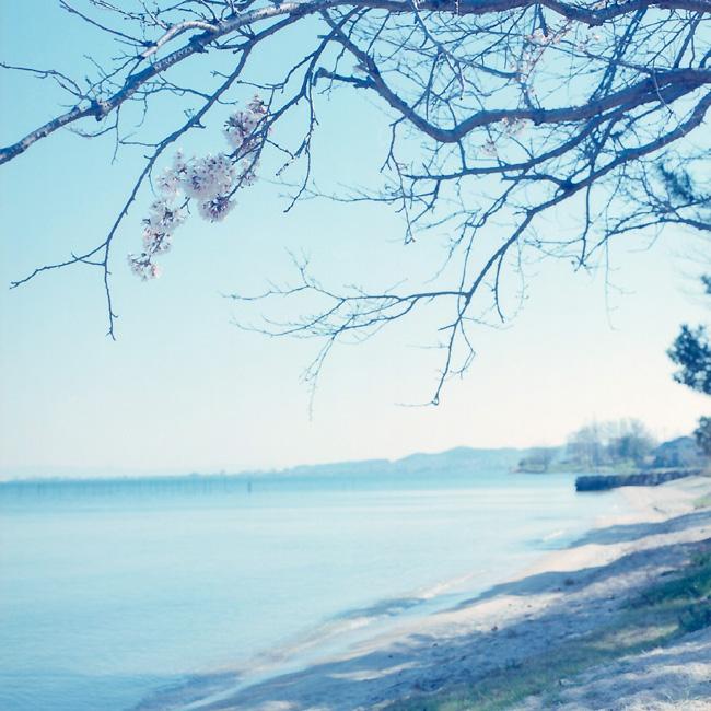 湖岸の春/琵琶湖