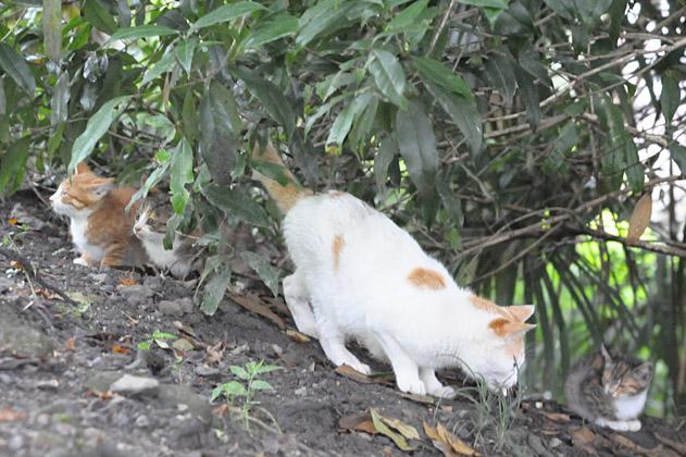 3匹の仔猫とお母さん猫