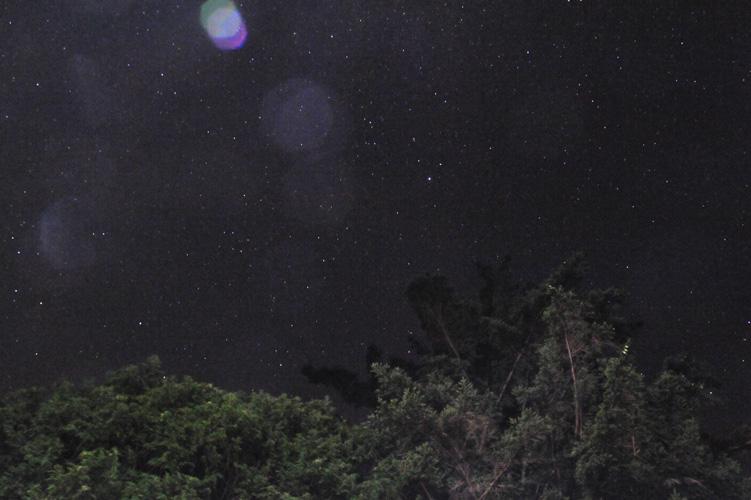 星空と大木
