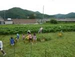 農業教室⑬