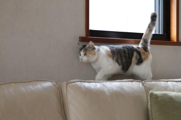 catwk.jpg