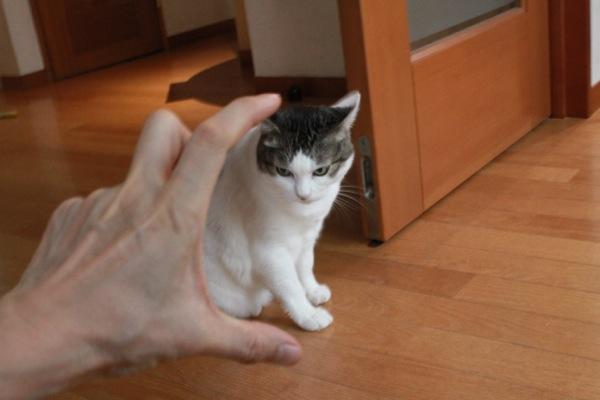 tenohirasa2.jpg