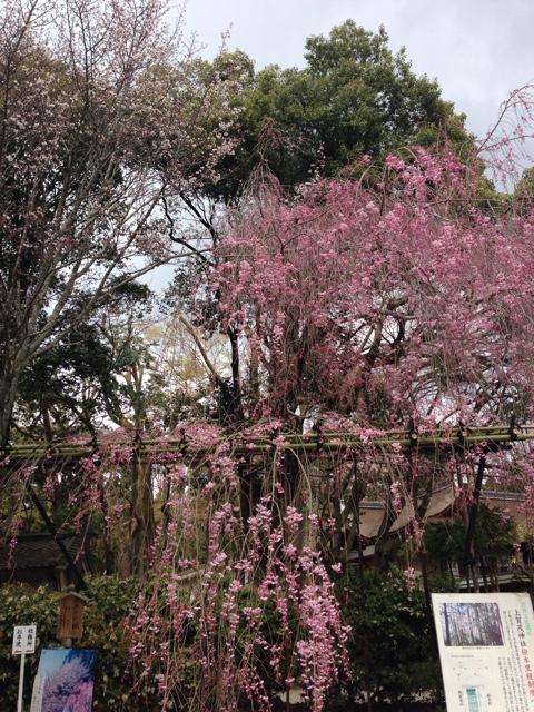 写真 2014-04-05 13 09 13