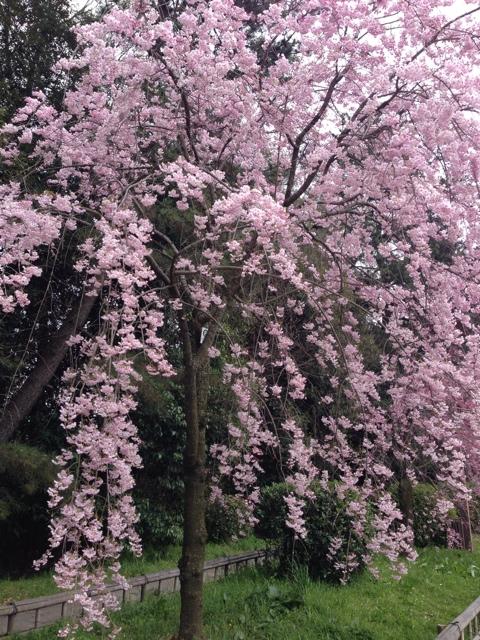 写真 2014-04-05 13 37 23