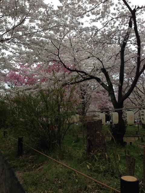 写真 2014-04-05 17 11 58