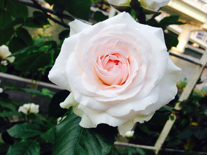 写真 2014-05-11 17 31 20_R