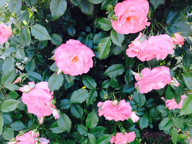 写真 2014-05-11 17 52 27_R