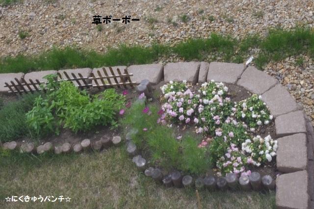 2014IMGP5824.jpg