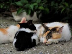 6704705-ノラ猫 母親の乳を飲む子
