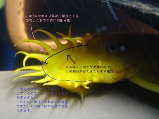 DSC05246_1.jpg