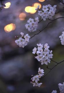 140330_tukashin_03w.jpg