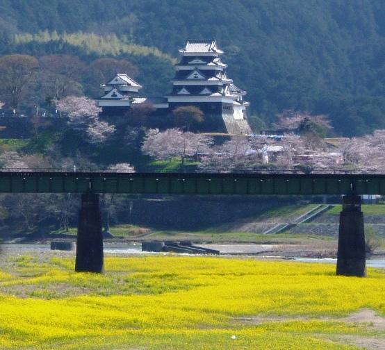 P104064大洲城の桜