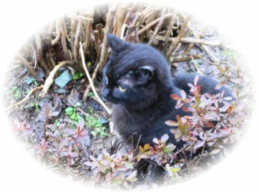黒猫のお迎え