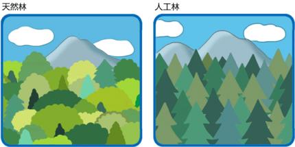 イラスト森林