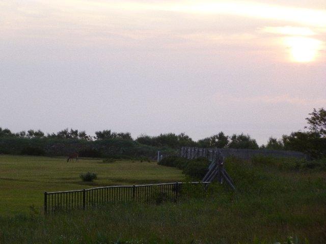 ミニゴルフ場で鹿