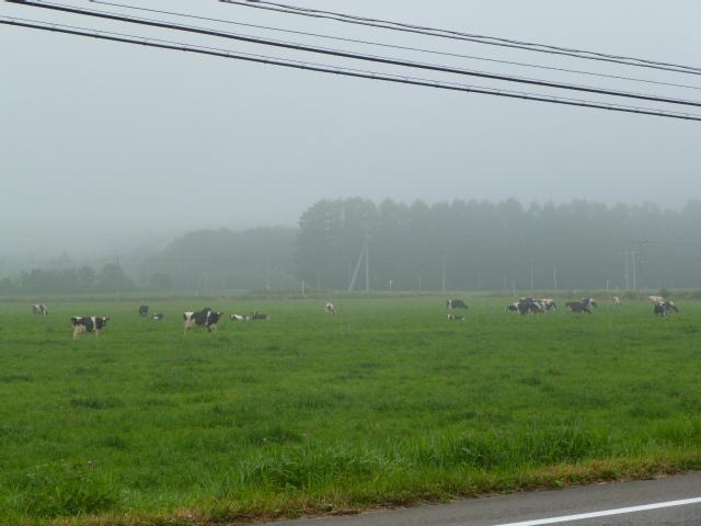広尾町の牧場